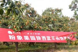 深耕社交电商助农第一线,粉象生活走进陕西富平县